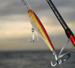 Stickbaits for Trevally, GT's, Tuna, Kingfish through to Salmon and Tailor. Find them here